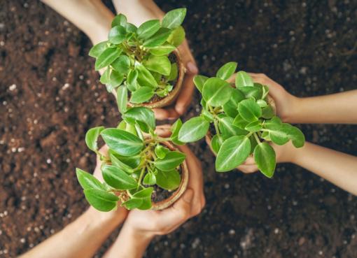 PAOT estará lanzando contenido de educación ambiental como parte del programa «Juntos Por Nuestro Planeta» en Salamanca