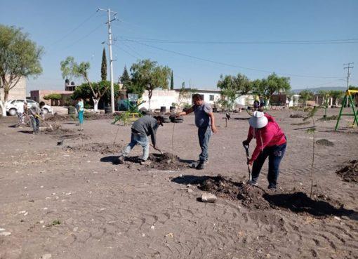 Apaseenses plantan 130 árboles en la colonia Vista Hermosa