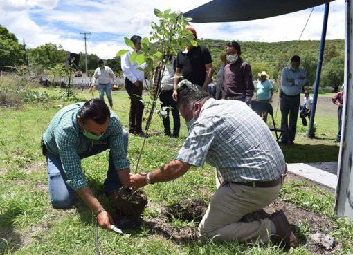 Dirección de Ecología lleva más de 4 mil árboles plantados en Apaseo el Grande