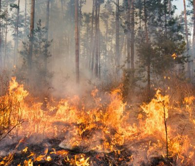Piden prevenir incendios de pastizales en San Miguel de Allende