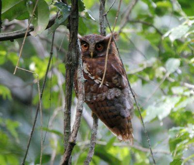 Liberan y atienden en Celaya especies endémicas