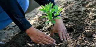 Este jueves arranca proyecto de reforestación en Silao