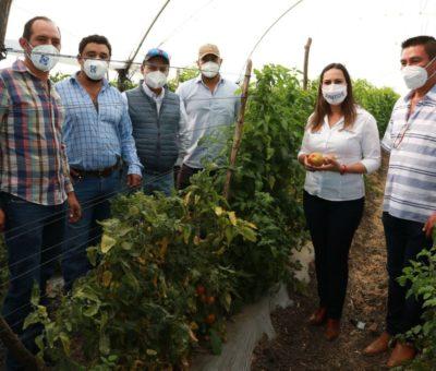 Lamentan productores agrícolasolvido degobierno deMorena, apuestan por el desarrollo conLorenaAlfaro