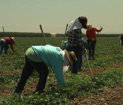 México denuncia que el sector alimentario de EE.UU. incumple leyes laborales